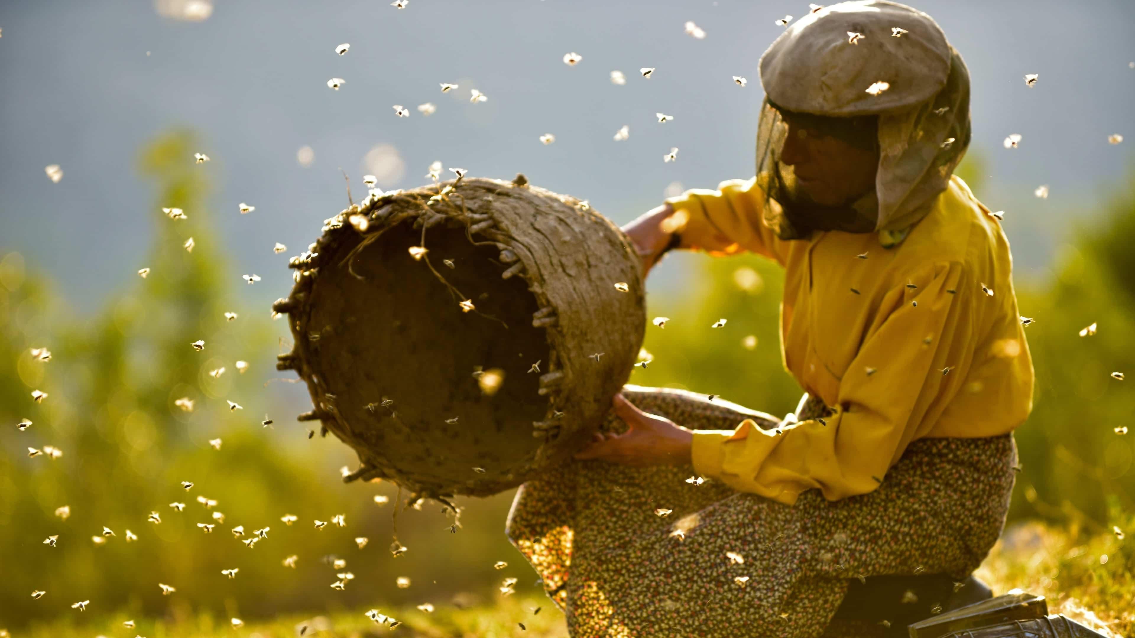 FILM - Země medu