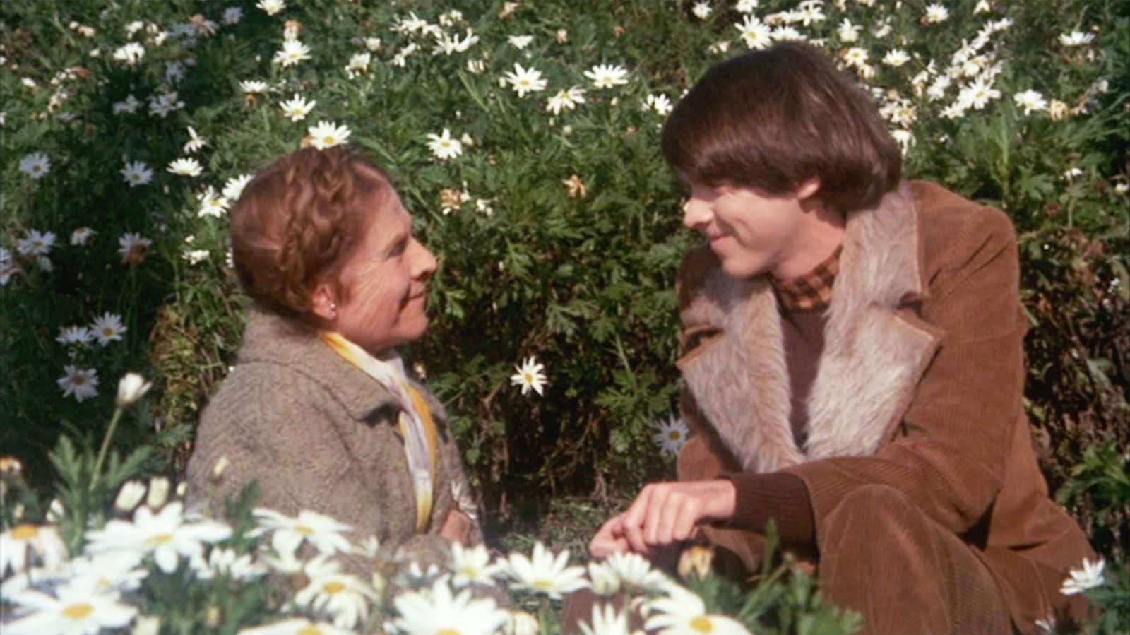 FILM - Harold a Maude
